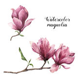 Waterverfmagnolia De hand schilderde bloemen botanische die illustratie op witte achtergrond wordt geïsoleerd Roze bloem voor ont stock illustratie