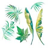 Waterverfpalmbladen, banaanbladeren, papajabladeren op wit worden geïsoleerd dat Royalty-vrije Stock Fotografie