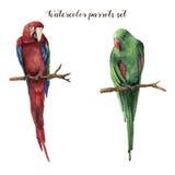 Waterverfpapegaaien Hand geschilderde rood-en-groene die ara en red-winged papegaai op witte achtergrond wordt geïsoleerd nave Stock Foto