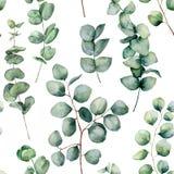 Waterverfpatroon met eucalyptus ronde bladeren Hand geschilderde baby en de zilveren die tak van de dollareucalyptus op wit wordt vector illustratie