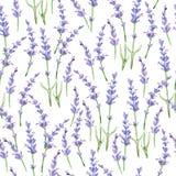 Waterverfpatroon met Lavendel Stock Foto