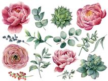 Waterverfpioen, succulente en ranunculus bloemenreeks De hand schilderde rode en blauwe bes, geïsoleerde eucalyptusbladeren royalty-vrije illustratie