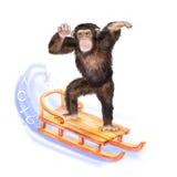 Waterverfportret van aap met een kroon Stock Afbeelding