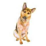 Waterverfportret van de hond van het Duitse herderras op witte achtergrond Hand getrokken zoet huisdier Royalty-vrije Stock Foto