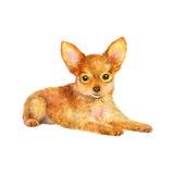 Waterverfportret van de rode Russische stuk speelgoed hond van het terriërras op witte achtergrond Hand getrokken zoet huisdier Stock Afbeeldingen