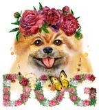 Waterverfportret van hond pomeranian spitz met bloemen vector illustratie