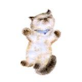 Waterverfportret van longhair katje van Himalayan Colourpoint Stock Afbeeldingen
