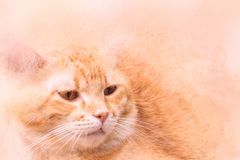 Waterverfportret van oranje kat de kleur van de kunstverf op canvas voor achtergrond royalty-vrije stock fotografie