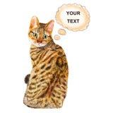 Waterverfportret van Spangled leuke kat van Californië met punten, strepen op witte achtergrond Stock Foto