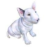 Waterverfportret van wit Engels Bull terrier, het witte arrogante puppy van de rassenhond op witte achtergrond Getrokken hand sw Stock Fotografie
