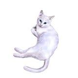 Waterverfportret van zeldzame exotische Khao Manee, Diamond Eye-kat op witte achtergrond Royalty-vrije Stock Foto's