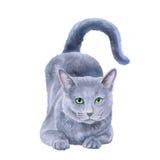 Waterverfportret van zeldzame exotische Nebelung-kat, Longhaired Russisch Blauw Stock Foto