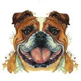 Waterverfprintshop, druk op het thema van het ras van honden, zoogdieren, dieren, kweekt Engelse buldog, buldog, portret, kleur r vector illustratie