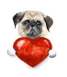 Waterverfpug hond met hart Huisdierenillustratie Stock Afbeeldingen