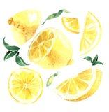Waterverfreeks citroenen Citroensegmenten, sappige citroen Vector IL Stock Illustratie