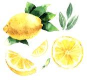 Waterverfreeks citroenen Citroensegmenten, sappige citroen Vector IL Vector Illustratie