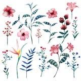 Waterverfreeks uitstekende bloemen tropische natuurlijke elementen stock fotografie