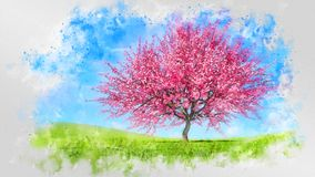 Waterverfschets met kersenboom in volledige bloesem stock afbeeldingen