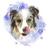 Waterverftekening van een hond van het collieras in de sneeuw, sneeuwvlokken, het likken, roze tong, portret van een hond, de win Stock Foto