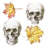 Waterverftekening van een menselijke schedel met een onderkaak en geen onderkaak voor Halloween-reeks met de herfst gele bladeren Stock Afbeeldingen