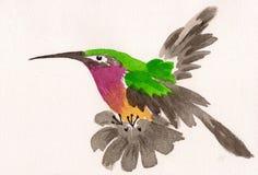 Waterverftekening van kolibrie Royalty-vrije Stock Afbeelding