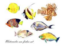 Waterverfvissen Overzeese vissen vastgestelde illustratie Stock Foto