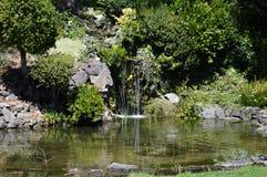 Watervijver Stock Foto's