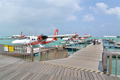 Watervliegtuig, Mannetje, de Maldiven Royalty-vrije Stock Fotografie