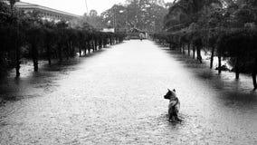 Watervloed in Thailand Stock Fotografie