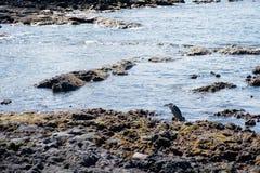 watervogels royalty-vrije stock foto