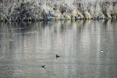 watervogels stock foto's