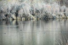 watervogels stock afbeeldingen