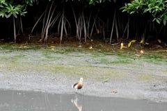 watervogels royalty-vrije stock afbeelding