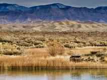 Watervogels Blind op de Rand van de Woestijn royalty-vrije stock fotografie