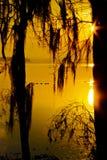Watervogels die van een Zonsopgang van Florida genieten stock foto's