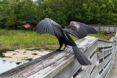 Watervogels die zich op een Houten Spoor bevinden royalty-vrije stock foto's