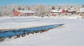 Watervogels langs de meestal bevroren Deschutes-Rivier Stock Afbeeldingen