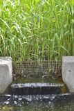 Waterway at water grass field Royalty Free Stock Photo