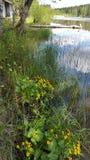 Waterweed παραλιών εξοχικών σπιτιών στοκ εικόνα