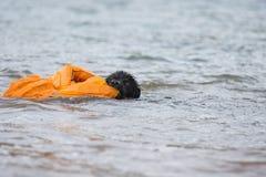 Waterwork australien de berger Images libres de droits