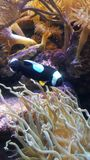 waterworld鱼珊瑚条纹 库存照片