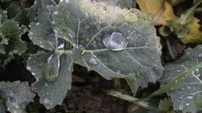 Waterworld - große Regentropfen auf grünen Blättern Stockfoto