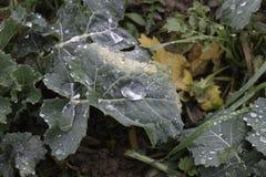 Waterworld - großer Regentropfen auf grünen Blättern Lizenzfreie Stockfotografie