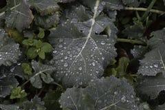 Waterworld - Regentropfen auf grünen Blättern Lizenzfreie Stockfotografie