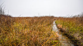 Watery grass to nowhere - thick fog on the Ottawa River. Stock Images