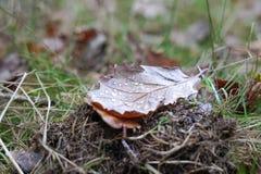 watery leaf arkivbild