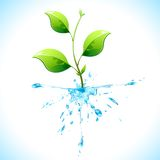Watery Plant Stock Photos