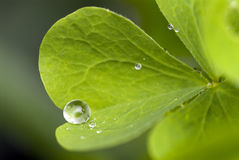Wather drop. Water drop on the green leaf Stock Photos