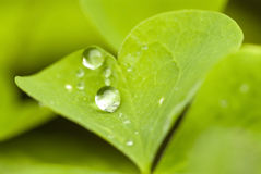 Wather drop. Water drop on the green leaf Stock Photo