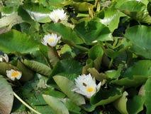 Wather kwiat obraz stock